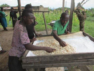 画像2: 直輸入!ベトナム産カカオ生豆(1kg お得価格)
