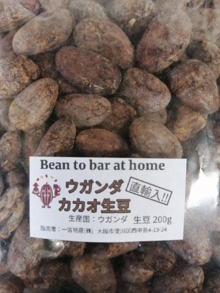 画像1: 【200g】直輸入!!ウガンダ産カカオ生豆 *必ず商品説明をご確認の上ご購入くださいませ。 (1)